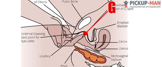 Как найти довести девушку до сильного оргазма